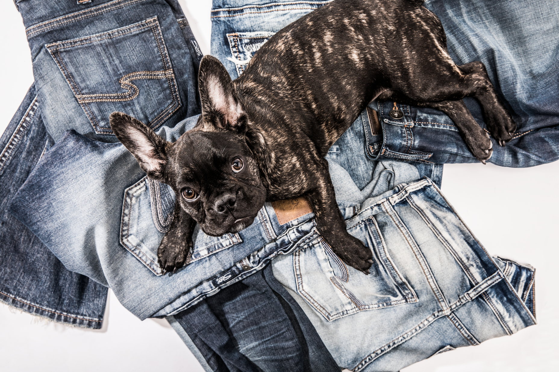 national-puppy-day-silver-jeans-co-mascot-chuck